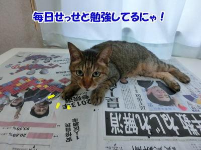 新聞を読んでるにゃ