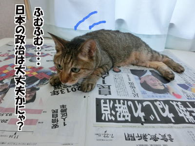 日本の政治を考えるネコ