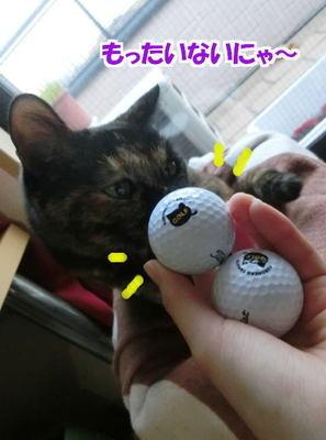 クロネコゴルフボール