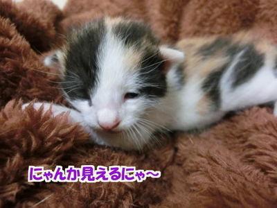 目が開き始めた猫