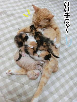 大きくなった子猫たち