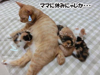 ママに休みなし