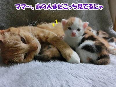 ママに甘えん坊7
