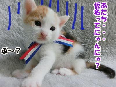 仮名はぷ~ちゃん