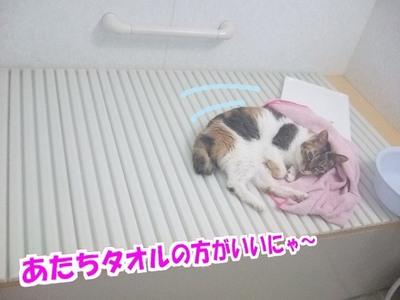 三毛猫のリラックスタイム
