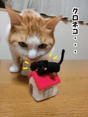 これ黒猫にゃ?